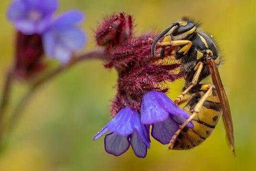 ekologia pszczoła